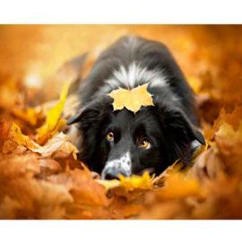 Hond In Bladeren Schilderen Op Nummers