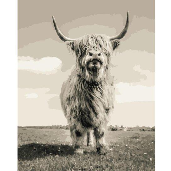 Schotse Hooglander In Het Wild