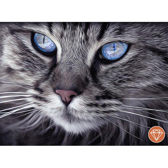 Cat Blue Eyes Fotograaf Arttower
