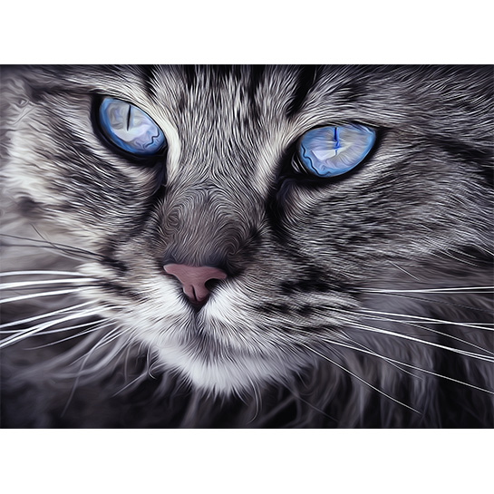 Cat Blue Eyes Fotograaf Arttower[1]