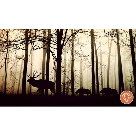 Forest Fotograaf Anja