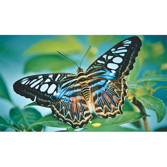 Tropische Vlinder Fotograaf Capri23auto[1]