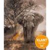 Klanten Resultaat Dark Elephant
